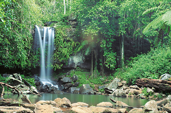 city-wedding-Curtis Falls at Tamborine Mountain National Park. Photo: Tourism and Events Queensland