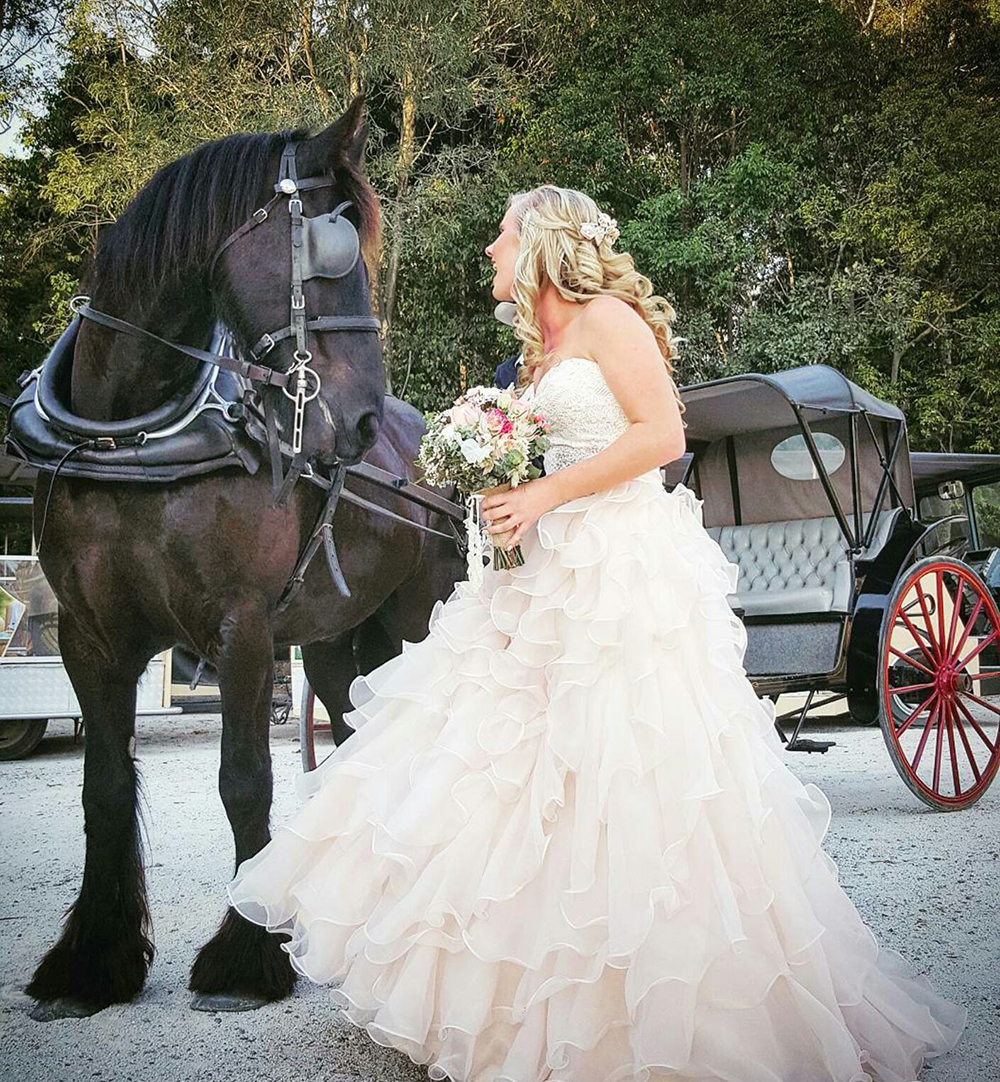 horse-drawn carriage at Paradise Country