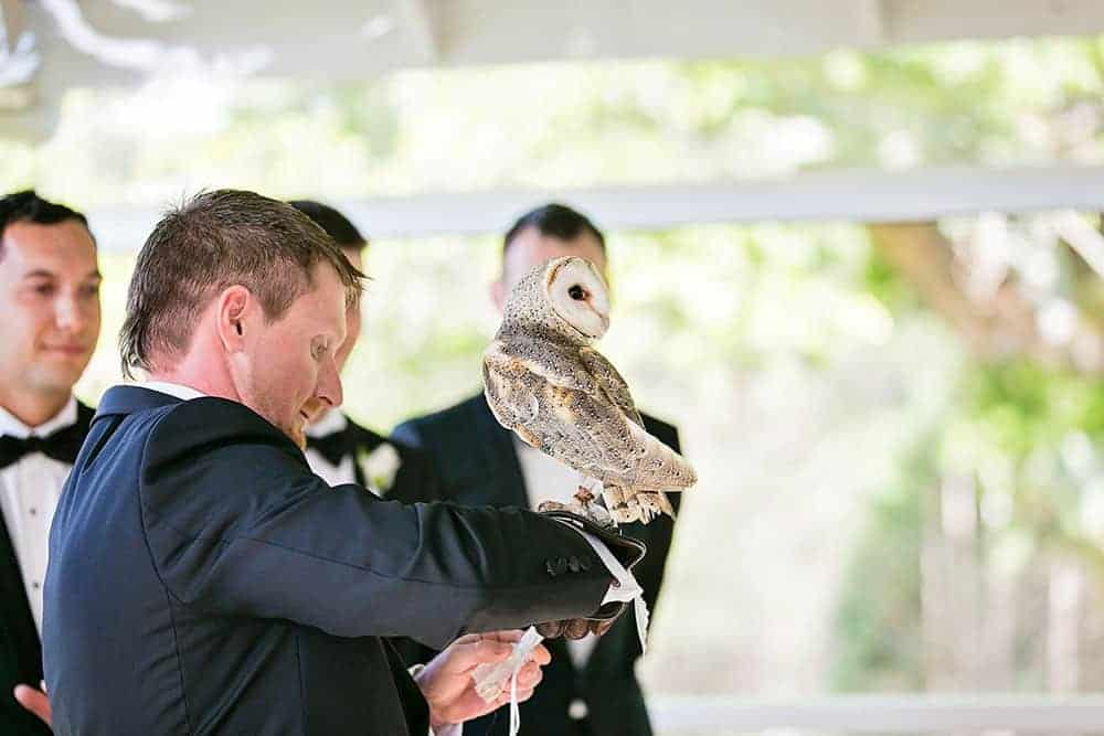 The feathery ring bearer