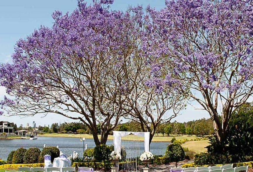 Wedding reception under the Jacaranda tree at Lakelands Golf Club