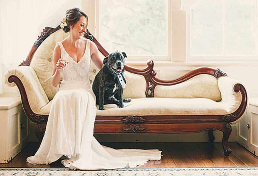 pets at weddings: bride with her bowtie-wearing dog.