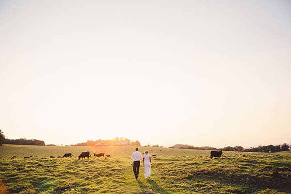 Animals at weddings: Bride and groom in a field with cows at sunset.