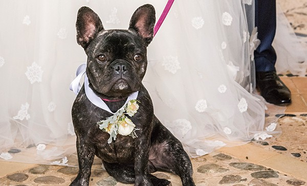 Pets at weddings! By Studio Impressions