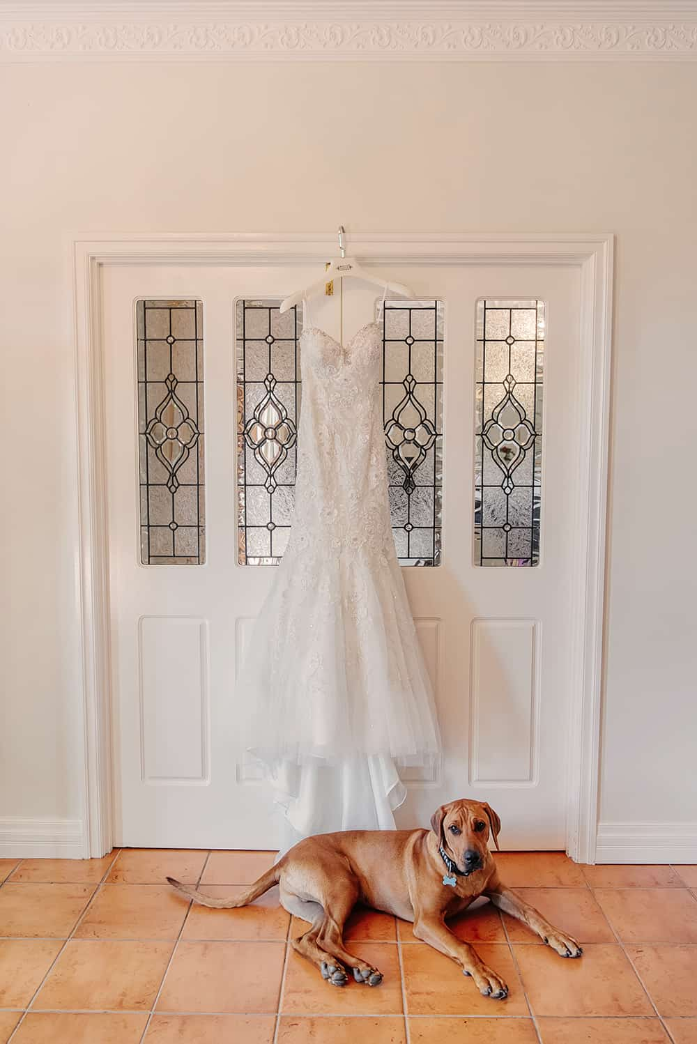 Party animals: dog and his brides dress.