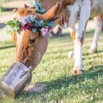 Party Animals: weddings + pets = gorgeous photographs!