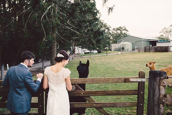Animals at weddings: Bride and groom with an alpaca.