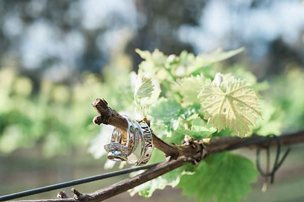 Wedding rings on a tree branch.