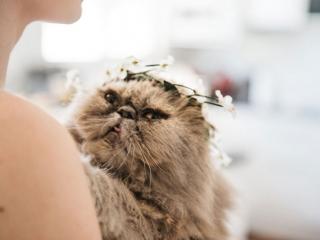 Pet cat as bridesmaid
