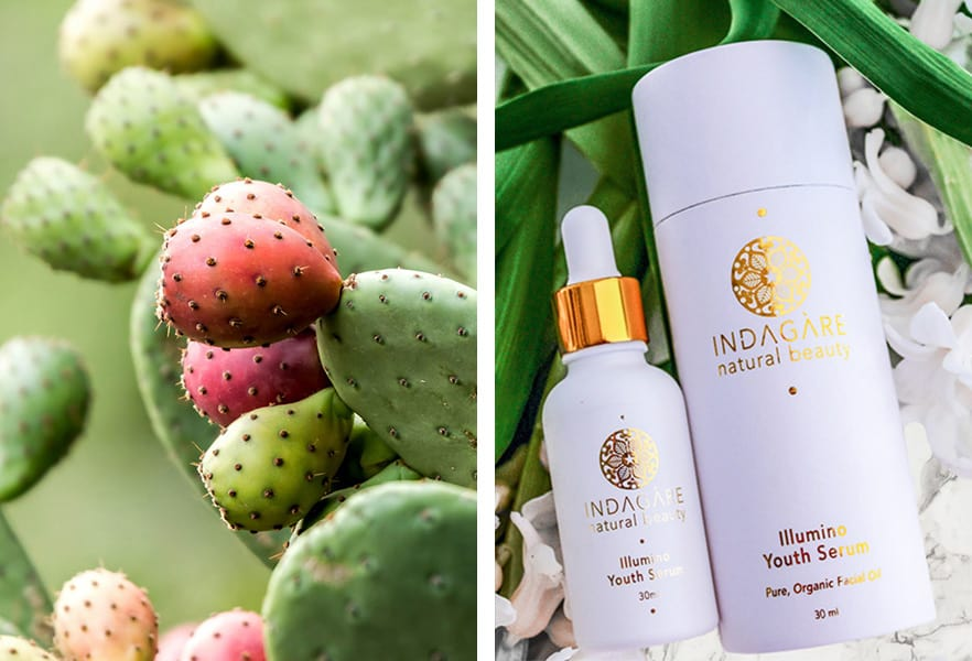 Prickly pear and Indagare's Illumino Youth Serum