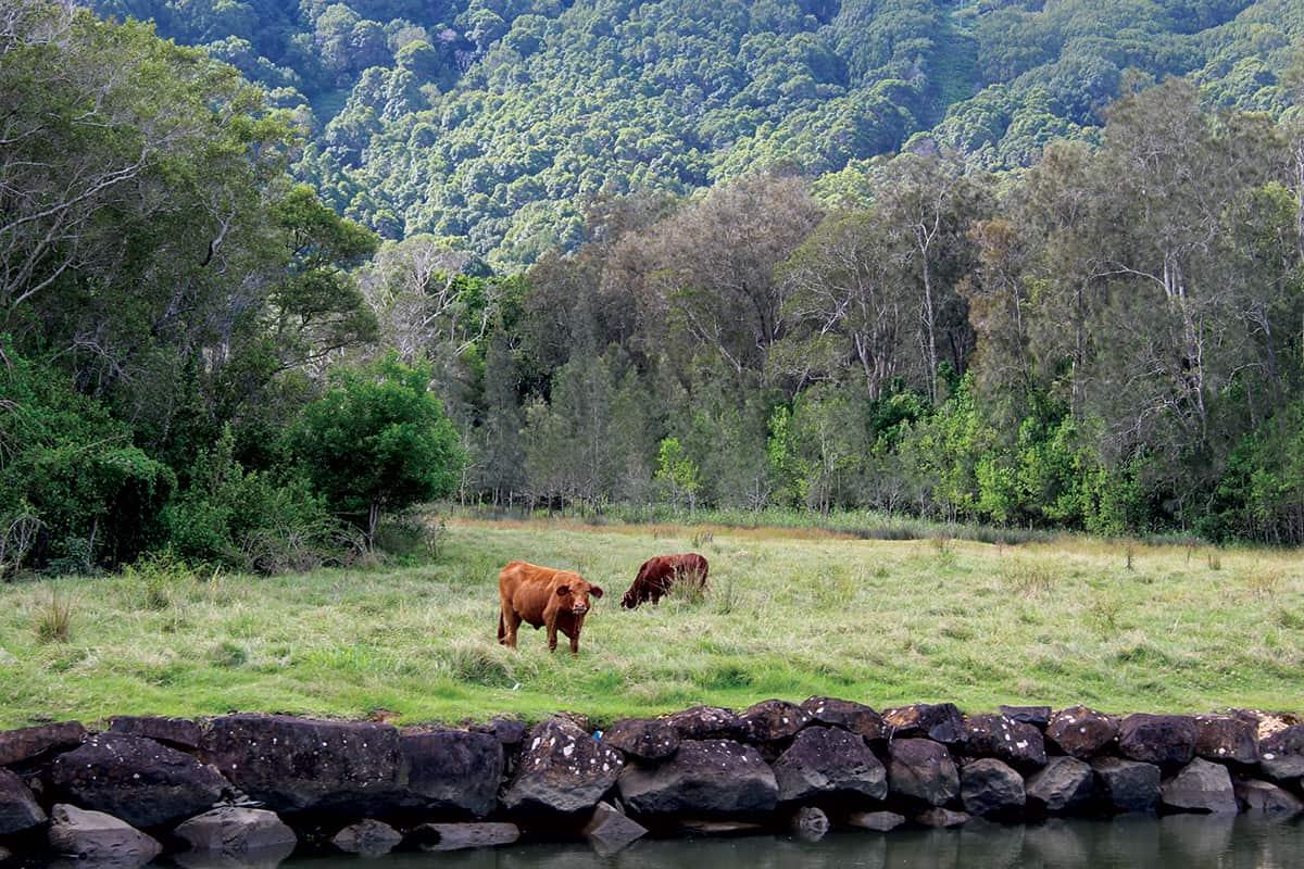 Mistere-honeymoon-story-RiverCruise-Farmland-Nikki-Ernst