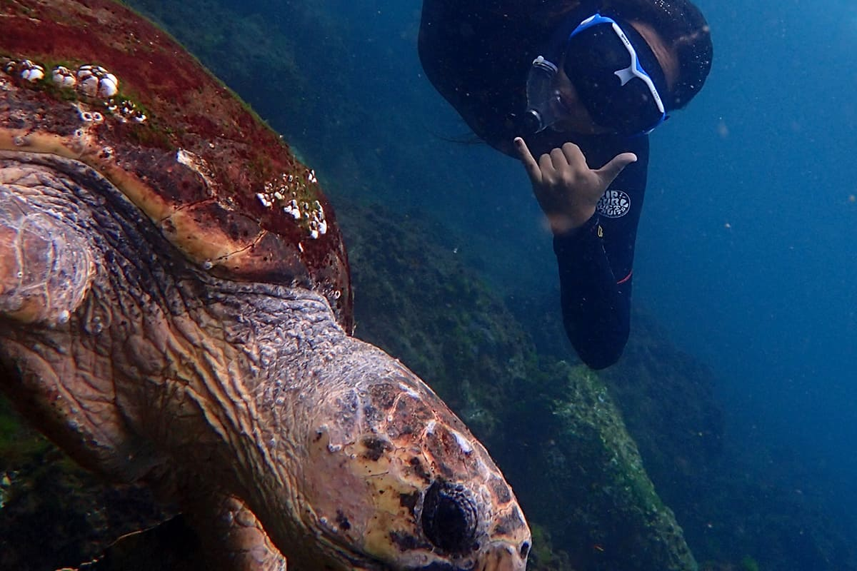 Rightous-Snorkelling-with-Turtles