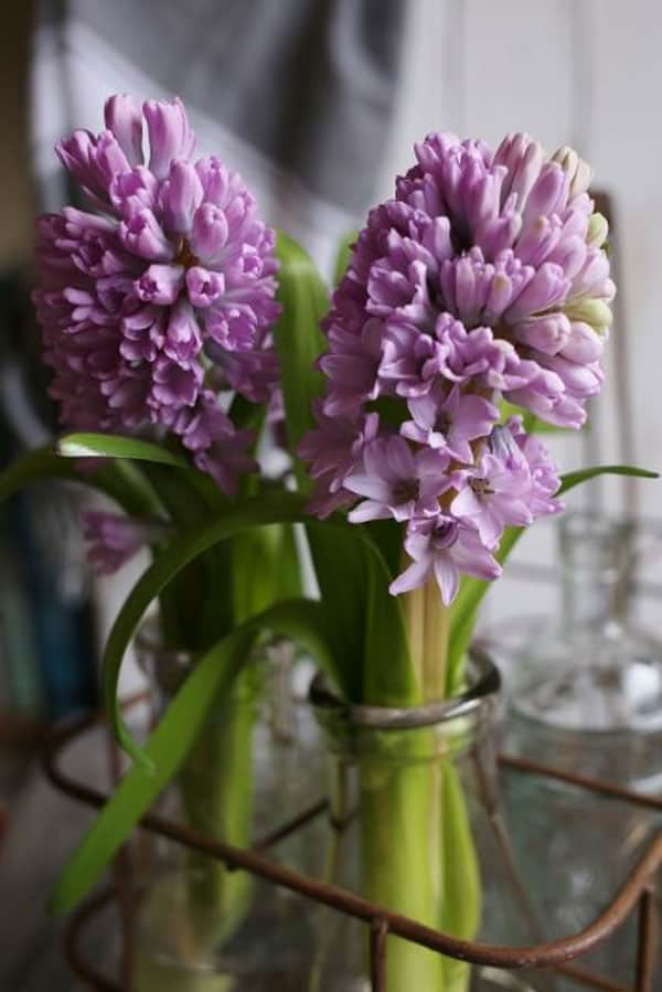 beautiful hyacinth florals for weddings