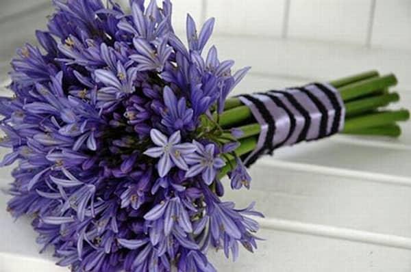 Spring Wedding Flowers, agapanthus