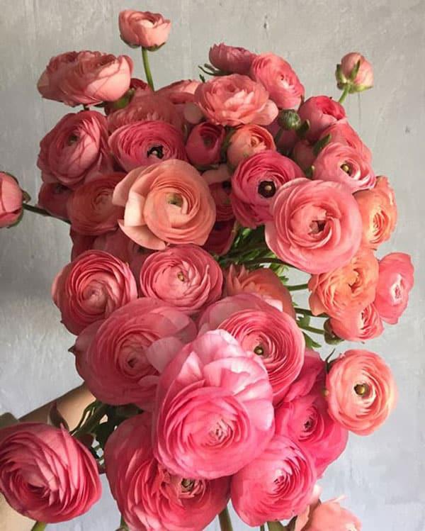 Spring Wedding Flowers, ranunculus