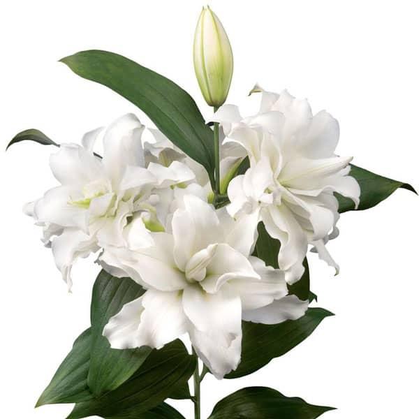 Spring Wedding Flowers, rose lily