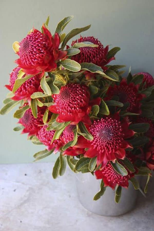Spring Wedding Flowers, waratah